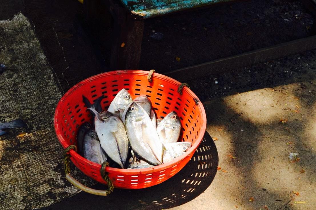 India: fish