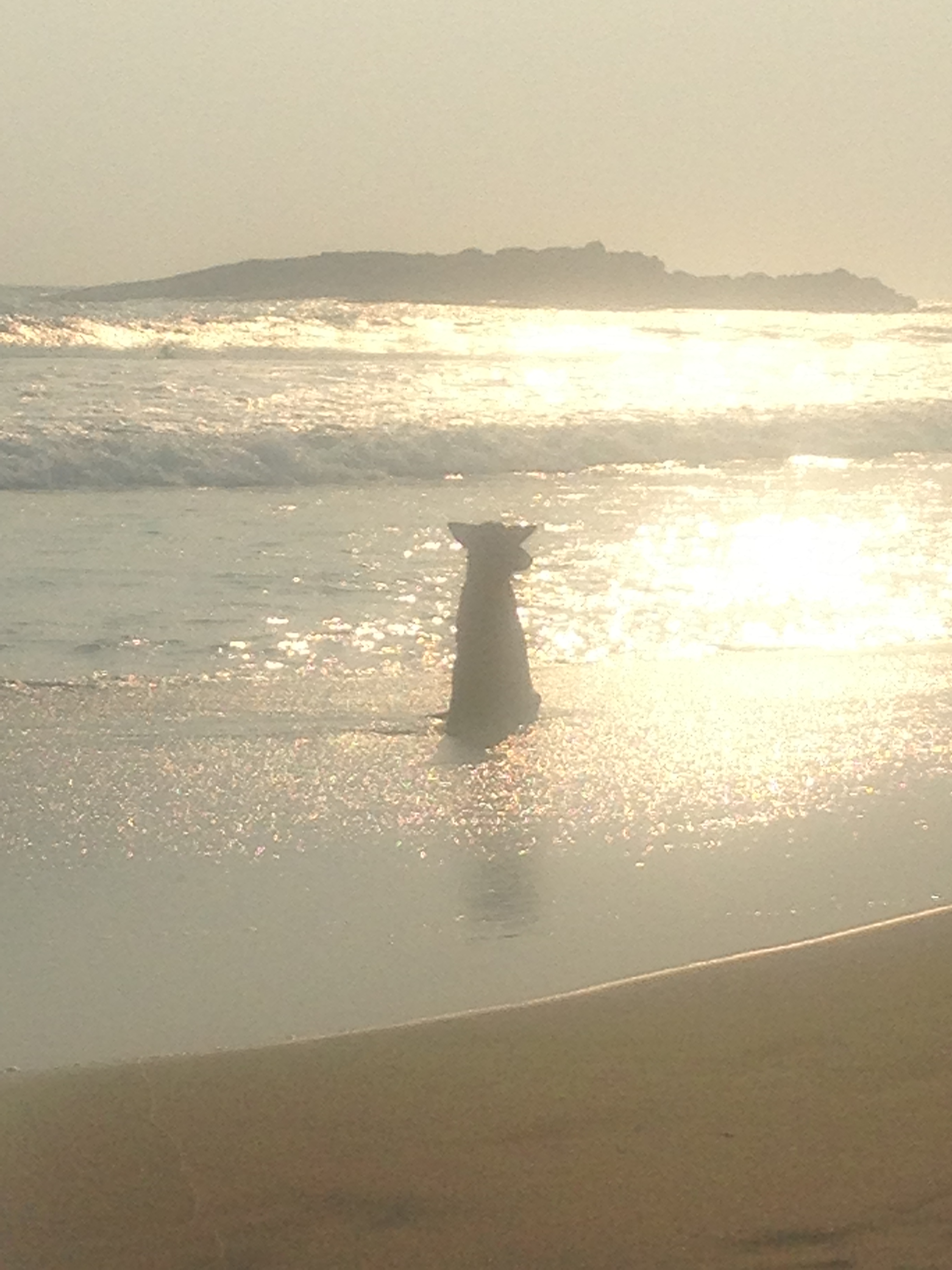 India: Kovalam dog sunset